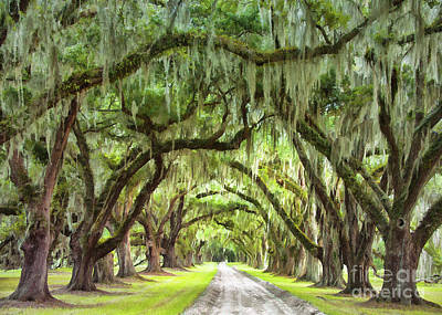 Photograph - Plantation Oaks II by Sharon Foster