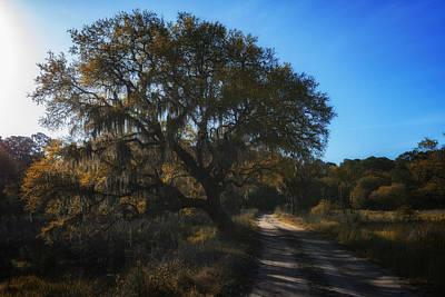 Country Dirt Roads Photograph - Plantation Road by Rick Berk