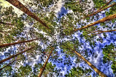 Photograph - Planted In Rows Georgia Pine Tree Art by Reid Callaway