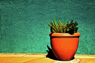 Photograph - Planter by Maria Coulson