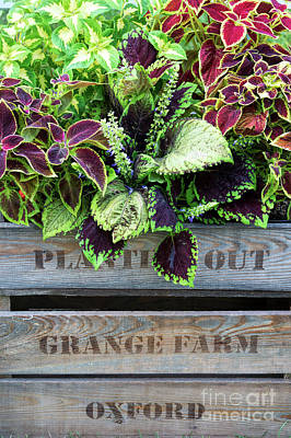 Planting Out Art Print by Tim Gainey