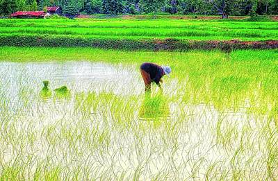 Photograph - Planting Rice by Ian Gledhill