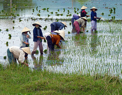 Photograph - Planting Rice by Joel Gilgoff