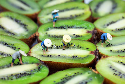 Kiwi Art Photograph - Planting Rice On Kiwifruit by Paul Ge