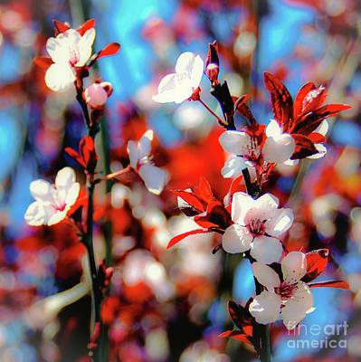 Photograph - Plants And Flowers by D Davila