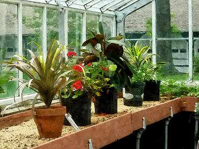 Shelf Photograph - Plants In Greenhouse by Susan Savad