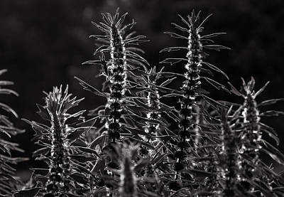Botanic Photograph - Plants In Sunshine by Lise-Lotte Larsson