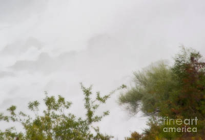 Photograph - Plants Of The Mist by Fred Lassmann