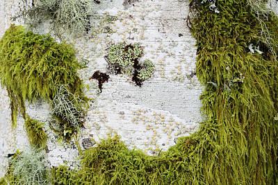 Photograph - Plants On Plants by Robert Potts