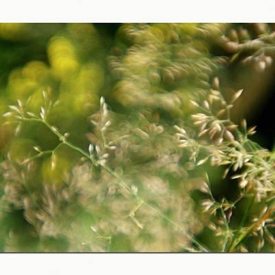 Florals Photograph - #plasticfantastic #plasticlens #bokeh by Mandy Tabatt