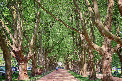 Photograph - Platanus Avenue by Teresa Zieba