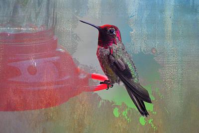 Plate 031 - Hummingbird Grunge Series Art Print