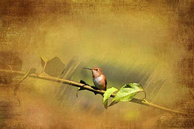 Plate 112 - Hummingbird Grunge Series Art Print