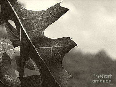 Photograph - Platinum Leaves 3 by Jeff Breiman