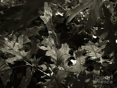 Photograph - Platinum Leaves 4 by Jeff Breiman