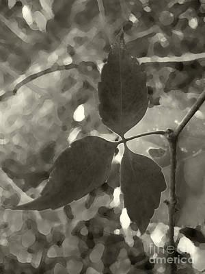 Photograph - Platinum Leaves 6 by Jeff Breiman