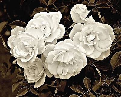 Photograph - Platinum Roses by Bob Wall