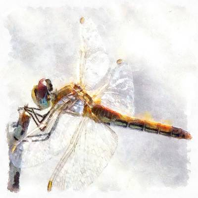 Painting - Platinum White Dragonfly Watercolor by Tracey Harrington-Simpson