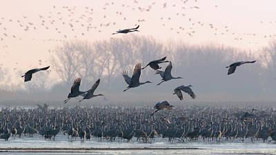 Photograph - Platte River Morn by Susan Rissi Tregoning