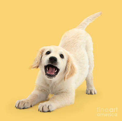 Photograph - Play Time Pup by Warren Photographic