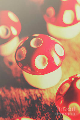 Toadstools Photograph - Play Toys Of Imagination by Jorgo Photography - Wall Art Gallery
