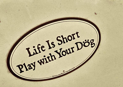 Photograph - Play With Your Dog by Jamart Photography