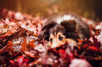 Playful Autumn Dog Art Print