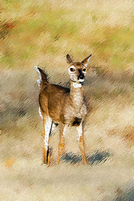 Photograph - Playful Baby Deer by Michelle McPhillips