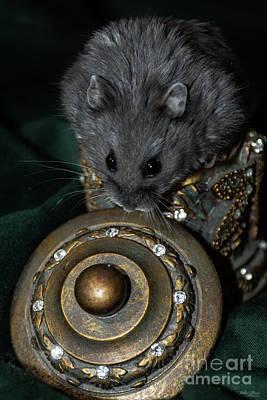 Photograph - Playful Blueberry Hamster by Jennifer White