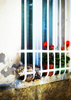 Tabby Photograph - Playful Cat On Window Sill In Italy by Susan Schmitz