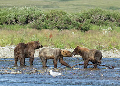Photograph - Playful Cubs by Cheryl Strahl