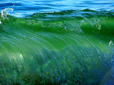 Undertow Photograph - Playful Passion by Dianne Cowen