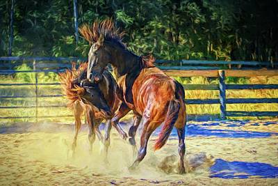 Photograph - Playful Fighting Colts by Alice Gipson