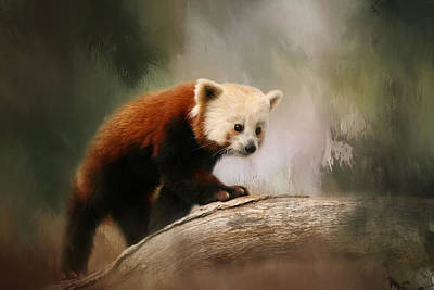 Photograph - The Panda Red by Kim Hojnacki
