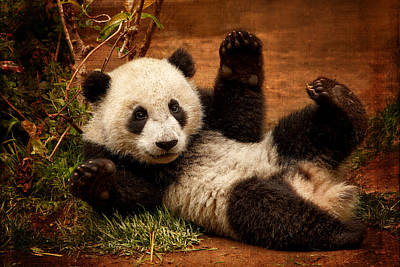 Photograph - Playful Panda by Mary Jo Allen