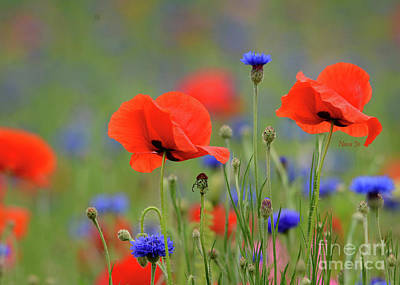 Photograph - Playful Poppies by Nava Thompson