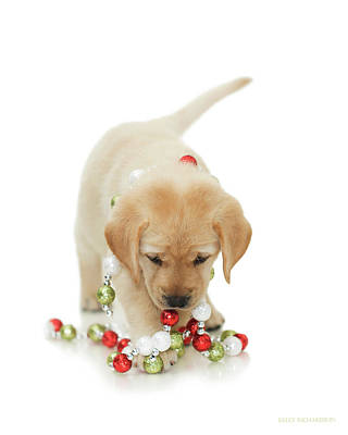 Photograph - Holiday Puppy Playtime  by Kelly Richardson
