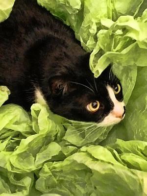 Playful Tuxedo Kitty In Green Tissue Paper Art Print by Kathy Clark