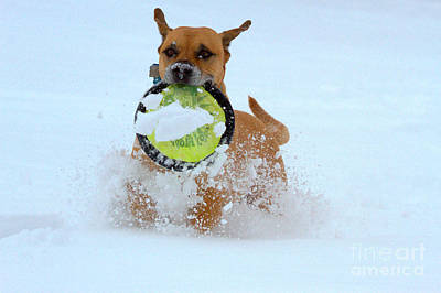 Photograph - Playing Frisbee In The Snow by Adam Jewell