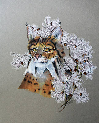 Bobcats Drawing - Playing In Milkweed by Virginia Simmons