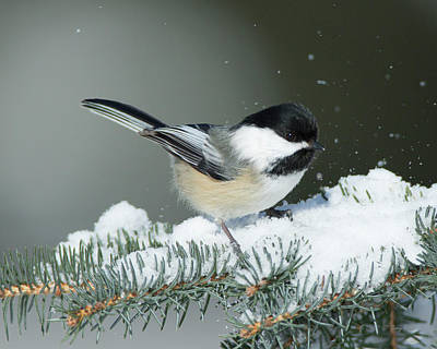 Photograph - Playing In The Snow by Gerry Sibell