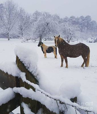 Photograph - Playing In The Snow by Rabiah Seminole