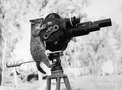 Possum Photograph - Playing Possum  by Jon Neidert