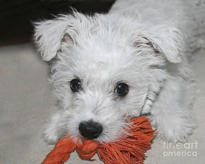 Fur Photograph - Playing Puppy by Terri Waters