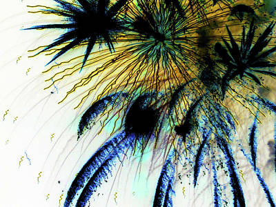 Photograph - Playing With Fireworks 16 by Mary Bedy