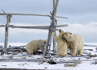 Playtime In The Arctic Art Print