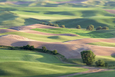 Photograph - Playtime In The Palouse by Jon Glaser