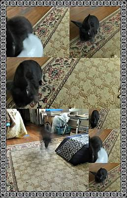Photograph - Playtime With Bunny by Denise Fulmer