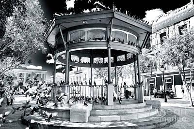 Photograph - Plaza De Armas Pigeon Party San Juan by John Rizzuto