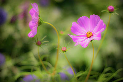 Photograph - Pleasant Summer Wild Flowers by Will Bailey